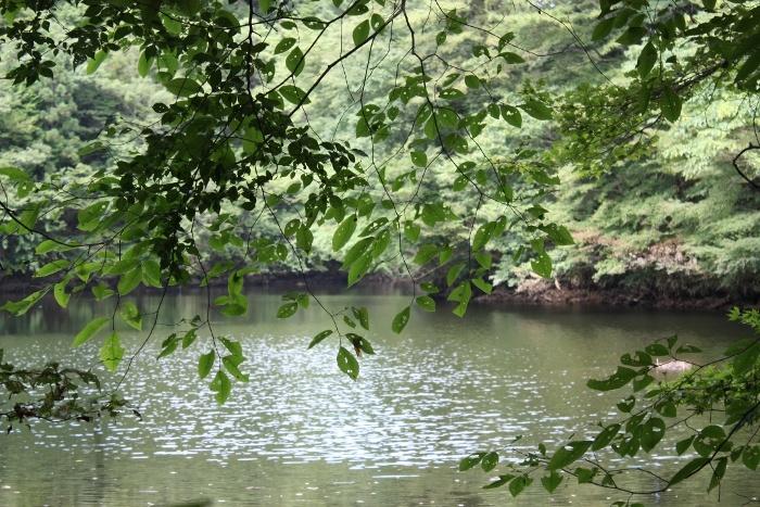 床並ダム 渓流